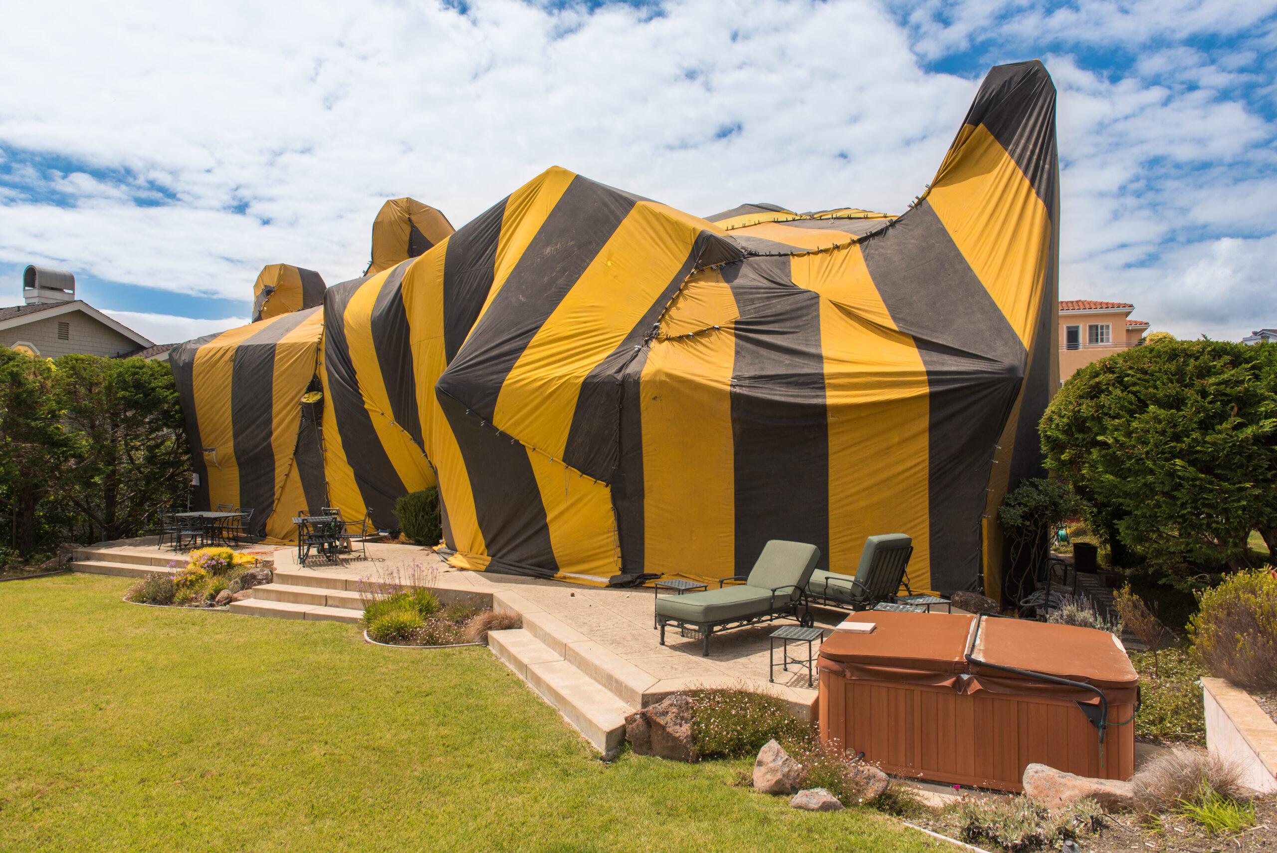 Termite fumigation tent.