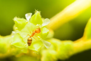 Closeup small red ant on flowers, Beautiful nature and copy space.