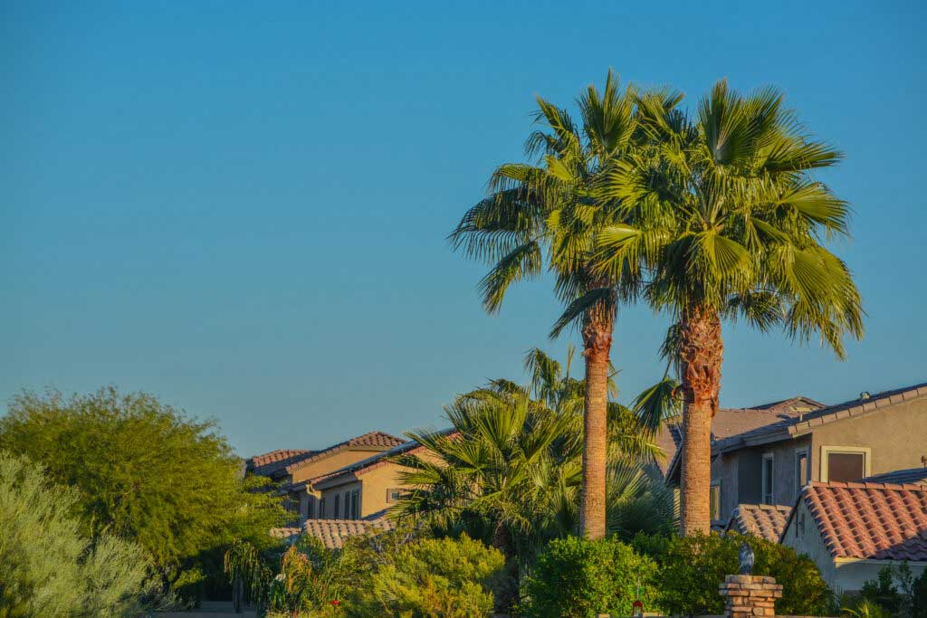 Beautiful view of the palm trees and plants in the southwest desert in Peoria, Arizona, Maricopa County