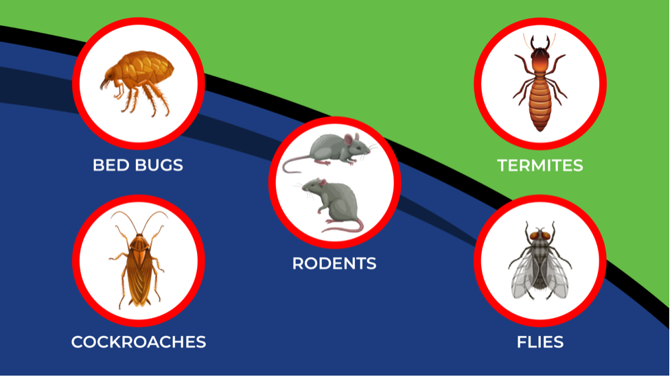 5 most common commercial pests in Arizona: bed bugs, cockroaches, rodents, termites, and flies